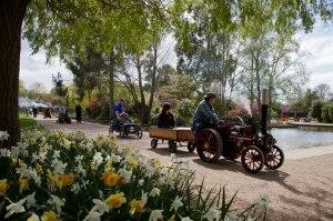 Springfield-MEH-Show-2015,-Traction-Engine-Run,-Springfield-Gardens-2